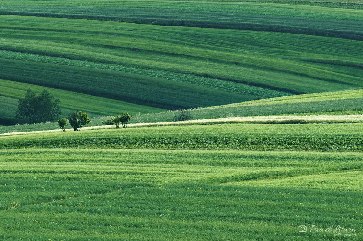 Świętokrzyskie pola