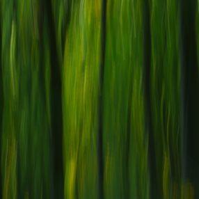 Las, fotografia Paweł Litwin