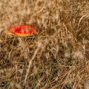 Muchomor czerwony, fot. Paweł Litwin
